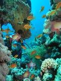 Operatore subacqueo Fotografia Stock