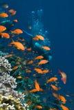 Operatore subacqueo Immagine Stock