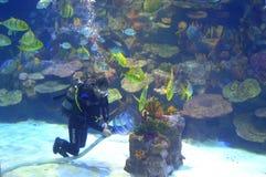 Operatore subacqueo in acquario Immagini Stock Libere da Diritti