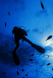 Operatore subacqueo blu Fotografie Stock Libere da Diritti