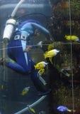 Operatore subacqueo Cleaning un carro armato fotografia stock