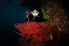 Operatore subacqueo con grande seafan Immagini Stock