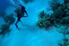 Operatore subacqueo con il boyancy fine, Cuba immagini stock libere da diritti