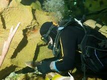 Operatore subacqueo coraggioso e piccolo squalo di infermiera Fotografie Stock Libere da Diritti