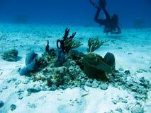 Operatore subacqueo in Cozumel Fotografie Stock Libere da Diritti