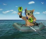 Operatore subacqueo del cane che va alla deriva in un gommone immagini stock