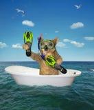 Operatore subacqueo del cane nel bagno sul mare immagine stock