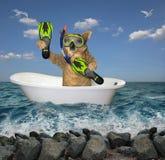 Operatore subacqueo del cane nel bagno sul mare 2 immagine stock