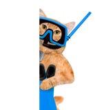 Operatore subacqueo del gatto fotografia stock