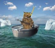 Operatore subacqueo del gatto che va alla deriva in un catino fotografia stock