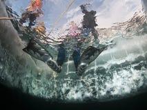 Operatore subacqueo del ghiaccio del Baikal immagine stock