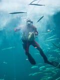 Operatore subacqueo dell'acquario di Hirtshals fotografie stock libere da diritti