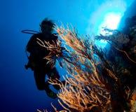 Operatore subacqueo della donna immagini stock libere da diritti