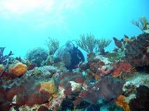 Operatore subacqueo della scogliera Fotografie Stock Libere da Diritti