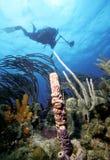 Operatore subacqueo della st San Cristobal fotografie stock