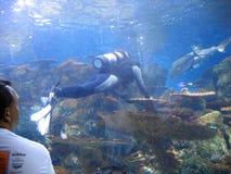 Operatore subacqueo di manutenzione Acquario del Pacifico, Long Beach, California, U.S.A. immagini stock libere da diritti