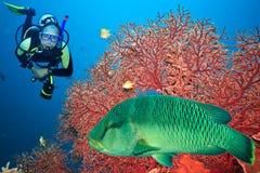 Operatore subacqueo di scuba Immagine Stock