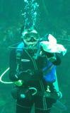 Operatore subacqueo di scuba al serbatoio di pulizia dell'acquario della baia del Monterey immagine stock