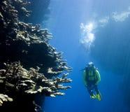 Operatore subacqueo di scuba che esamina corallo Fotografia Stock Libera da Diritti