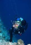 Operatore subacqueo di scuba della donna immagini stock