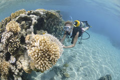 Operatore subacqueo di scuba della femmina adulta in bikini fotografia stock libera da diritti