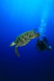 Operatore subacqueo di scuba e della tartaruga Immagini Stock Libere da Diritti