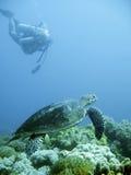 Operatore subacqueo di scuba e tartaruga di mare verde Fotografia Stock Libera da Diritti