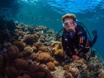 Operatore subacqueo di signora con la scuola dei diamondfish fotografie stock