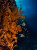 Operatore subacqueo di signora e gorgonian spettacolare immagini stock libere da diritti