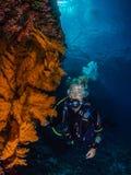 Operatore subacqueo di signora e gorgonian spettacolare immagine stock