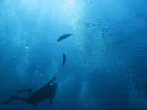 Operatore subacqueo e bolle 04 fotografie stock