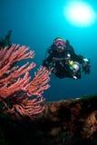 Operatore subacqueo e corallo Fotografia Stock Libera da Diritti