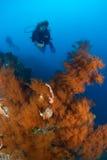 Operatore subacqueo e l'Indonesia di corallo Sulawesi Fotografia Stock Libera da Diritti