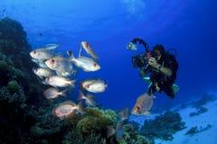 Operatore subacqueo e pesci di scuba immagine stock libera da diritti