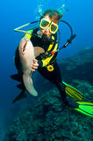 Operatore subacqueo e squalo Fotografie Stock Libere da Diritti