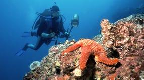 Operatore subacqueo e stelle marine Immagine Stock