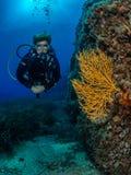 Operatore subacqueo femminile e gorgonian giallo, scogliera di Formiche fotografia stock