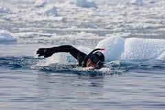 Operatore subacqueo fra il ghiaccio Fotografia Stock