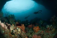 Operatore subacqueo, gorgonia a Ambon, Maluku, foto subacquea dell'Indonesia Fotografia Stock