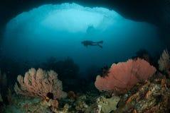 Operatore subacqueo, gorgonia a Ambon, Maluku, foto subacquea dell'Indonesia Immagine Stock Libera da Diritti