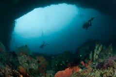 Operatore subacqueo, gorgonia a Ambon, Maluku, foto subacquea dell'Indonesia Fotografie Stock