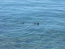 Operatore subacqueo nel mare Fotografia Stock