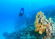 Operatore subacqueo - ragazza subacquea immagini stock libere da diritti