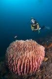 Operatore subacqueo sopra la spugna del barilotto immagine stock