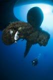 Operatore subacqueo sul naufragio immagine stock