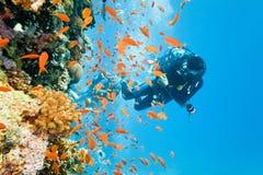 Operatore subacqueo sulla barriera corallina Fotografia Stock