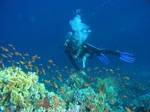 Operatore subacqueo sulla scogliera Immagini Stock