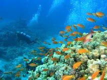 Operatore subacqueo sulla scogliera Fotografia Stock