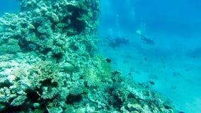 Operatori subacquei al fondo del Mar Rosso fotografie stock libere da diritti