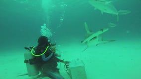 Operatori subacquei che alimentano il pesce di galleggiamento del martello underwater Fauna selvatica dell'oceano bolle diving stock footage